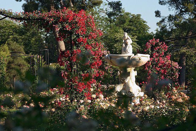 La Rosaleda Parque Oeste